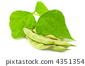 Kidney ( soy ) beans with leaves isolated on white background 4351354