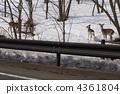 에조 사슴 튀어주의 4361804