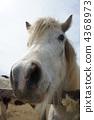 牲畜 家畜 马 4368973