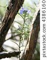 迷迭香的森林(树和花) 4386160