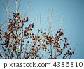 ผลไม้ของไต้หวันฟูและท้องฟ้าสีฟ้า 4386810