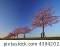 แนวต้นไม้ริมถนน,ดอกซากุระบาน,ซากุระบาน 4394202