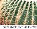 Ceremonial / cactus / Kim Yeon (kishashirchi) / Echino cactus 4415799