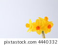yellow, flower, grandeur 4440332