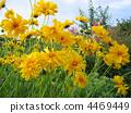 植物相 特寫 蓓蕾 4469449