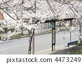 bus stop, bus-stop, busstop 4473249