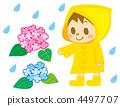 绣球花和一个男孩(雨季) 4497707