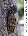 곤충, 세미, 벌레 4532074