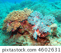 Soft Coral 4602631