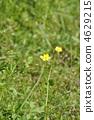 꽃, 피는, 잔디밭 4629215