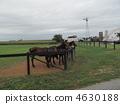 馬 4630188