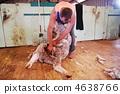 ออสเตรเลีย,สัตว์,ภาพวาดมือ สัตว์ 4638766