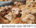 สัตว์,ภาพวาดมือ สัตว์,ออสเตรเลีย 4638771