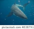 ฉลาม 4638791