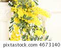 Mimosa flower * interior 4673140