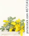 Mimosa flowers * Miscellaneous goods 4673141