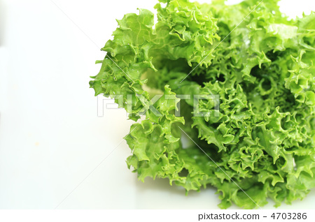 Green Lettuce 4703286