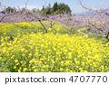봄의 소경 4707770