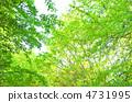 녹색 4731995