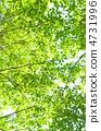 녹색 4731996