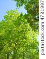 녹색 4731997