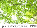 녹색 4731998