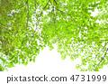 녹색 4731999