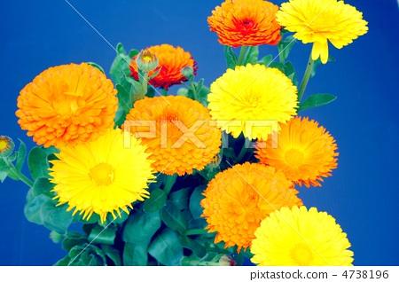 Gold flower flowers 4738196