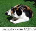 Cat's Chibi-chan 4738574