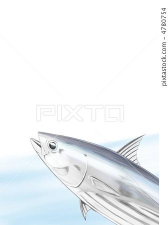 Bonita illustration 4780754