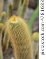 Cactus (Kim Akimaru) 4781683