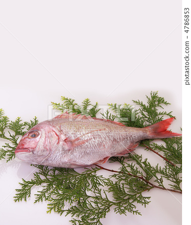 Red snapper 4786853