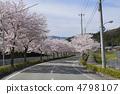 지방도 카와 니시 타선의 벚꽃 4798107