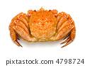 crab, crabs, hair 4798724