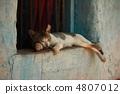 Cat sleeping in the window 4807012