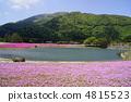富士柴叶樱花节 4815523