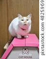 캣 하우스의 고양이 4825969