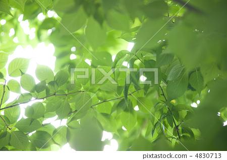 Green leaves 4830713