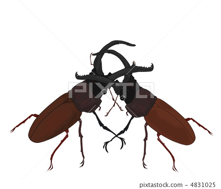 Stock Illustration: insect, stag beetle, hexapod