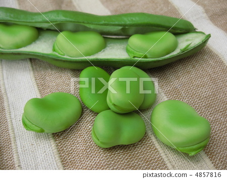 broad bean 4857816