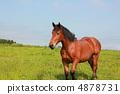 Horse 4878731