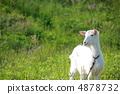goat 4878732