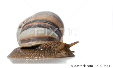 isolated snail 4919384