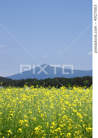 Mt. Himen and Rape blossom 4927665