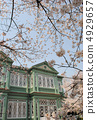 Old Hunter house and cherry blossoms (Heterogeneity in the Oji zoo) 4929657