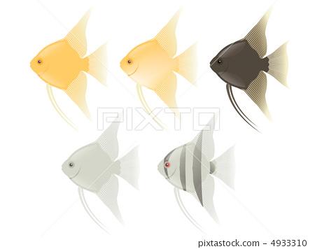 Angelfish 4933310