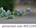 植物 植物學 植物的 4951264