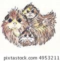 three guinea pigs. picture 4953211