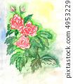 rose, watercolor 4953229
