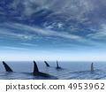 海洋 鯊魚 海浪 4953962